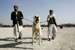 Men waiting for  start of dog fighting in the district Chaman-e-Babrak in Kabul, Afghanistan on November 19, 2004. Photo Michal Novotny
