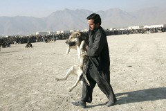 Man carries a dog injured during dog fighting in the district Chaman-e-Babrak in Kabul, Afghanistan on November 26, 2004. Photo Michal Novotny