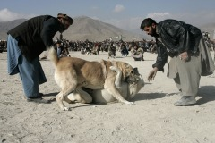 Men watch their dog fighting in the district Chaman-e-Babrak in Kabul, Afghanistan on November 19, 2004. Photo Michal Novotny