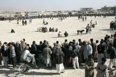 Dog fighting in the district Chaman-e-Babrak in Kabul, Afghanistan on November 19, 2004. Photo Michal Novotny